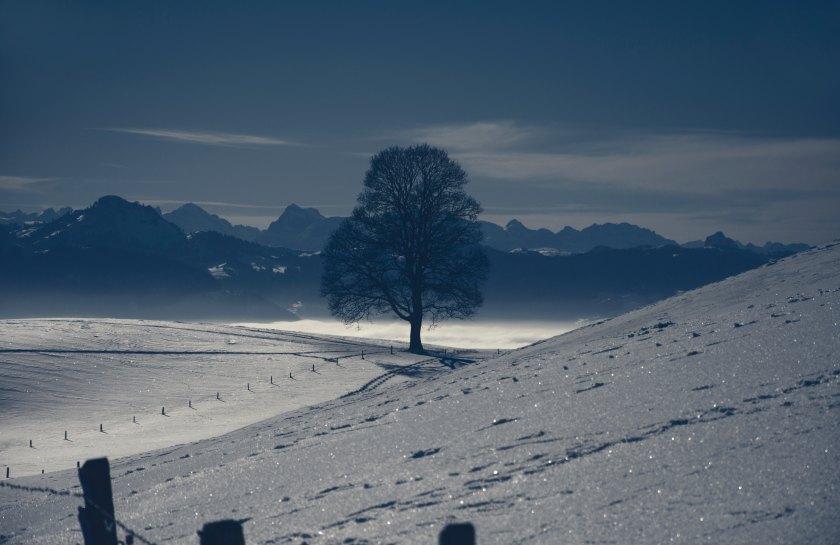brigitta-schneiter-197084-unsplash.jpg